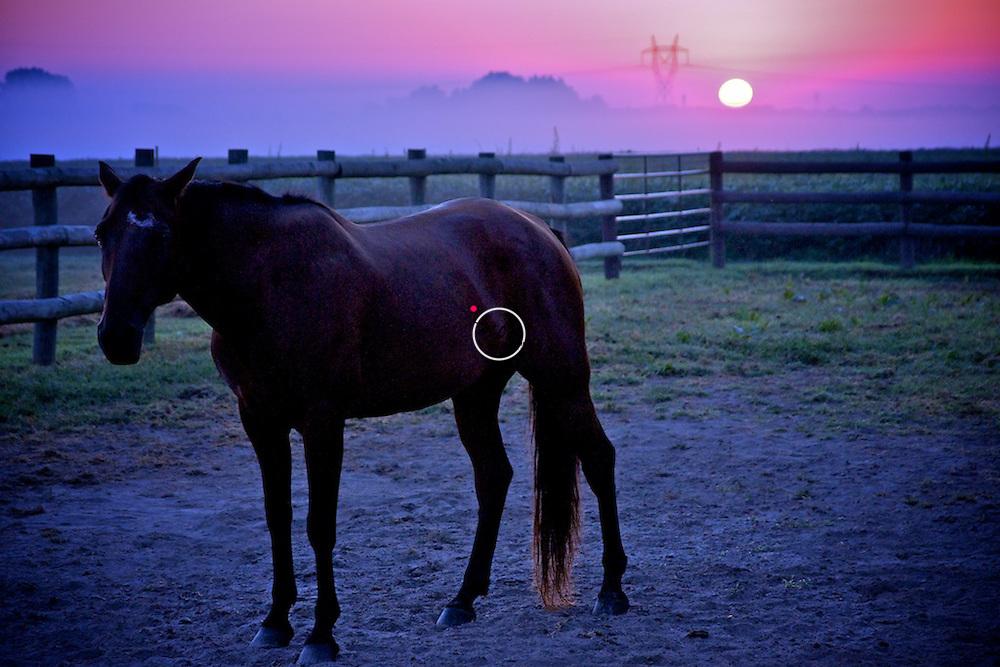 sunrise horse dark