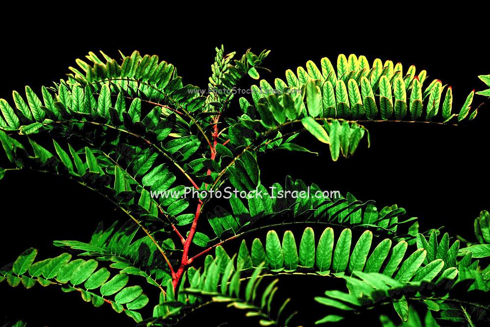 lush green leafs on black background