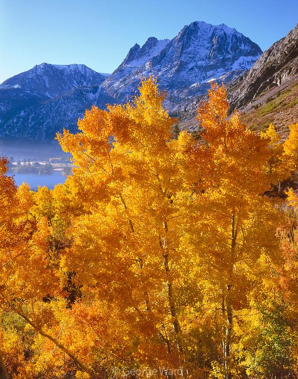Carson Peak and Aspens along Rush Creek, Inyo National Forest, California
