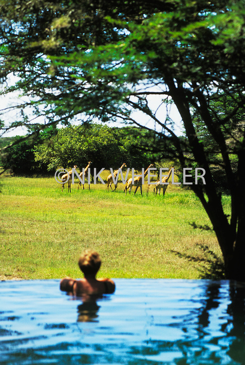 Woman watches giraffes from the Phinda Lodge Pool in Natal, South Africa.
