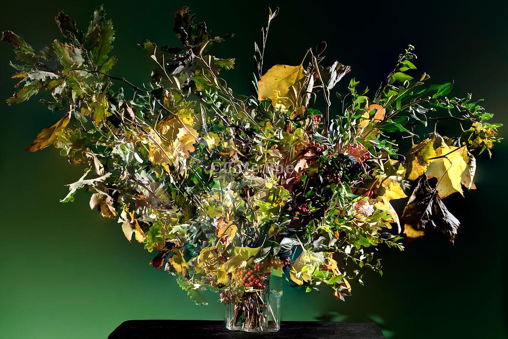 various plants twigs composite still life