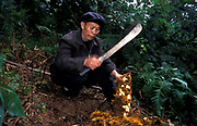 Chen Yi He, Chinese Herbalist, outside the town of Meng Yang goes for an early morning  search for roots, bark, leaves, seeds, etc.  which he will then use for his medical practice, Xiao Meng Yang town, China