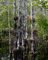 Florida Everglades photo by Catherine Brown