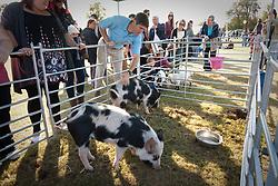 Children's farm animals at fair on Lordship Recreation Ground, Tottenham, London
