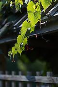 20160925_Plantations_