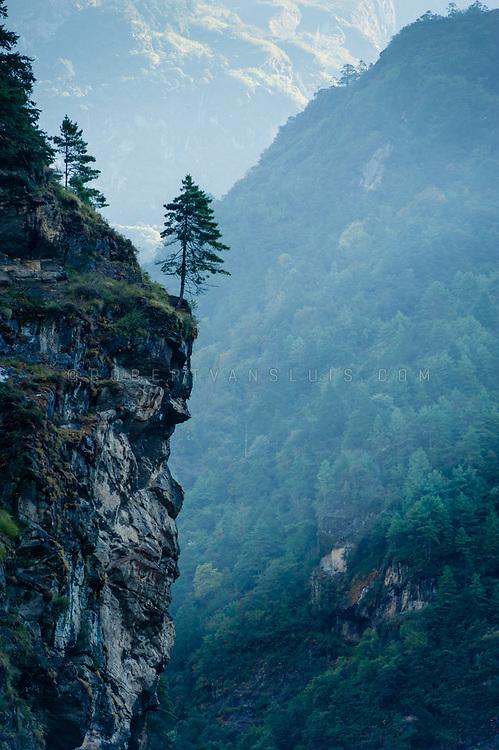 A lone tree on a rock in the Nepal Himalaya. Photo © robertvansluis.com