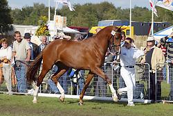 330-Unassion<br /> KWPN Paardendagen Ermelo 2004<br /> Photo © Hippo Foto