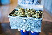 Marajuana flower at Oregon Coast Cannabis, a marajuana dispensary in Manzanita, Oregon.
