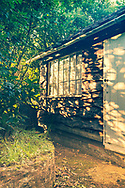 Garden shed with evening sinlight through hedge illuminationg wany edge oak boarding and window.