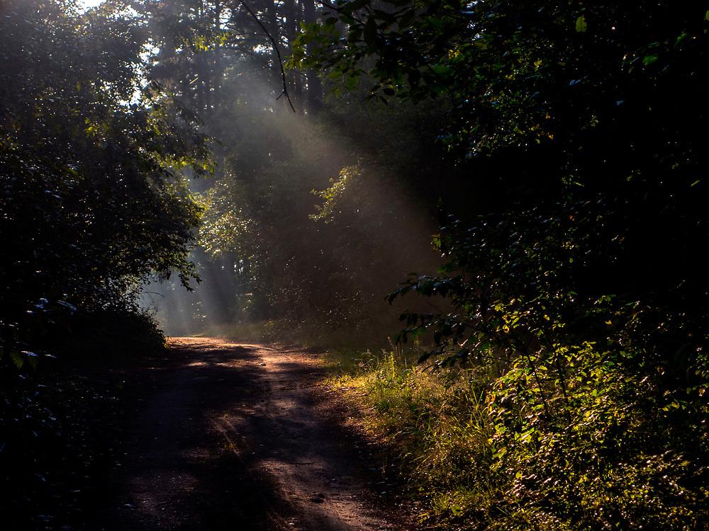 Puszcza Augustowska, Polska<br /> Augustowska Forest, Poland