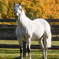 FRAC DADDY - Thoroughbred Stallion