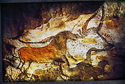 Paleolithic cave painting, Lascaux Cave, France. These are horse and cow figures in the central gallery. The Lascaux cave paintings in south-western France, around 17,000 years old, were painted by Cro-Magnon man, an early European culture of modern humans (Homo sapiens sapiens), using red, brown and yellow ochre, and black manganese dioxide. They may have had religious and artistic significance.