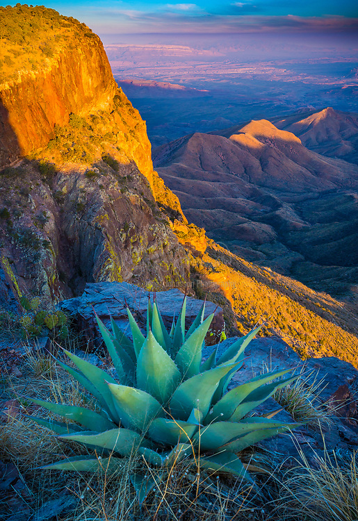 Big Bend National Park in the U.S. state of Texas has national significance as the largest protected area of Chihuahuan Desert topography and ecology in the United States. It contains more than 1,200 species of plants, more than 450 species of birds, 56 species of reptiles, and 75 species of mammals. The national park covers 801,163 acres. A variety of Cretaceous and Cenozoic fossil organisms exist in abundance, and the park has artifacts estimated to be 9,000 years old. Historic buildings and landscapes offer graphic illustration of life along the international border in the 19th century. For more than 1,000 miles, the Rio Grande/Río Bravo forms the international boundary between Mexico and the United States, and Big Bend National Park administers approximately 118 miles along that boundary. The park was named after the area, which is bounded by a large bend in the river and Texas-Mexico border.