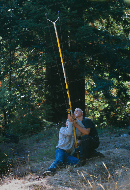 To get a rope into the 320 foot Henry Tree, the first branches of which begin at about 150 feet, climbers Ling Sinclair (blond hair) and Greg Liu use a Big Shot to launch a lead-filled pouch trailing a fishing line.
