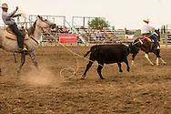 Will James Roundup, Ranch Rodeo, Big Loop, Hardin, Montana, Brett Marshall, Kirk Lohof