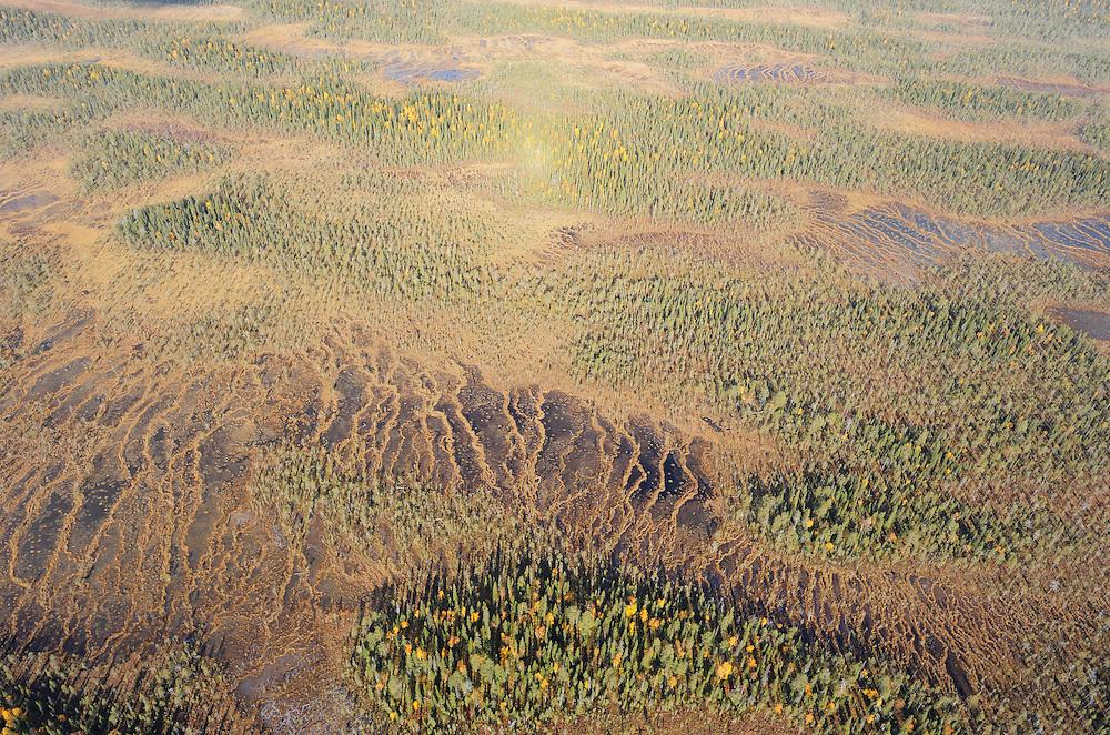 Peat bog in Oulanka National Park, Finland.