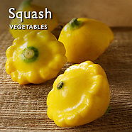 Squash Pictures    Squash Food Photos Images & Fotos