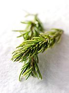 Fresh Rosemary herhs