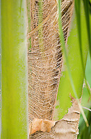 Abstract detail of coconut matting on tree.
