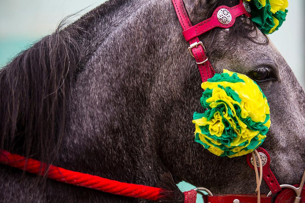 Bonfim_MG, Brasil.<br /> <br /> Tradicional Carnaval a cavalo na cidade de Bonfim, Minas Gerais. Evento acontece ha mais de 130 anos e reune cavaleiros mascarados no centro da cidade.<br /> <br /> Traditional Carnival horse in the town of Bonfim, Minas Gerais. Traditional event in downtown.<br /> <br /> Foto: RODRIGO LIMA / NITRO