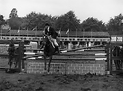 """07/08/1980<br /> 08/07/1980<br /> 07 August 1980<br /> R.D.S. Horse Show: John Player Top Score Competition, Ballsbridge, Dublin. Brian Henry on """"Marble Arch""""."""