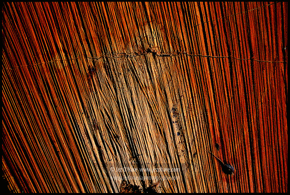 Tropical hardwood tree cut by a chainsaw, East Kalimantan, Indonesia.