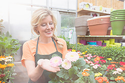 Female shop assistant touching pink flower plant in garden centre, Augsburg, Bavaria, Germany