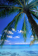 Palm tree, ocean<br />