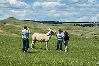 """These feral donkeys (Equus africanus asinus) are known as """"begging burros""""  in Custer State Park.   They are said to be decendants of the donkeys used in the Black Hills during the gold rush days.  They have earned their nickname because they approach visitors and cars looking for food.  South Dakota."""