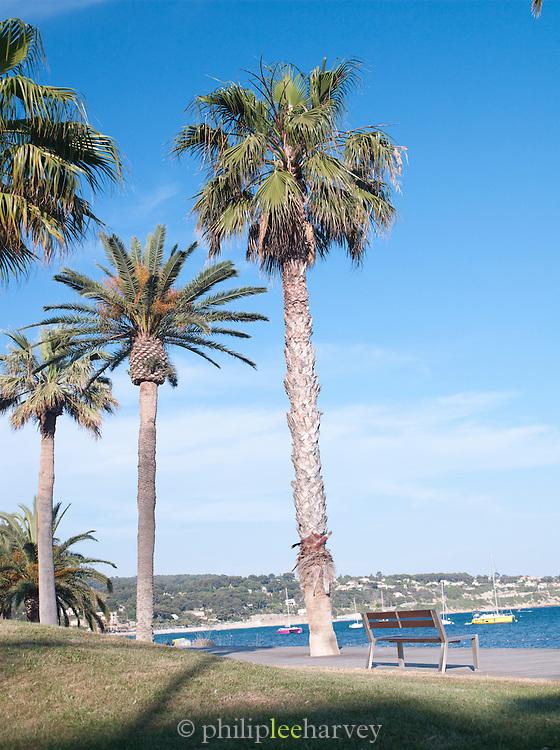 Palm trees line the promenade of Bandol, France