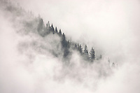 Clearing clouds reveal a ridge of trees, in Stevens Canyon Mt Rainier National Park, Washington, USA