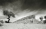 Arid, desert landscape in the Potosi department, Bolivia