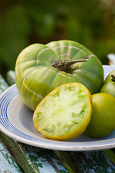Tomato 'Aunt Ruby's German Green'. Heirloom beefsteak tomato