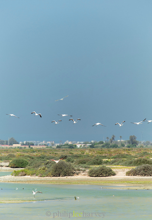 Birds flying over water in Puerto Real, Spain