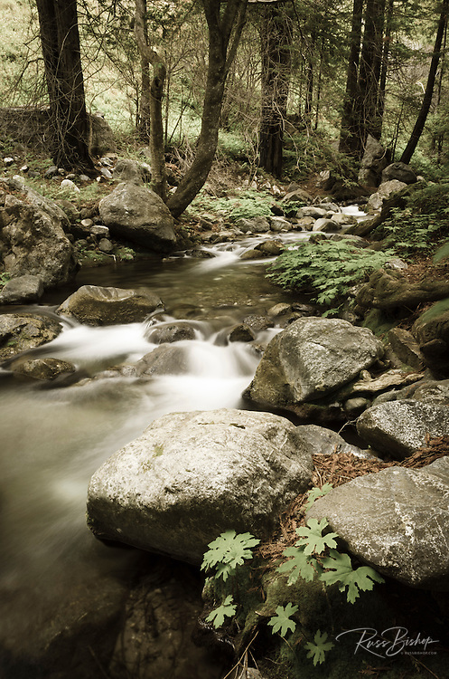 Hare Creek and redwoods, Lime Kiln State Park, Big Sur, California