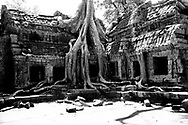 Ancient tree grows out of Ta Prohm temple roof, its roots nearly covering entire facade, Angkor, Siem Reap, Cambodia Southeast Asia