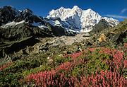 Chomolonzo peak, post monsoon wild flowers in Kharta valley, Esat of Everest, Tibet