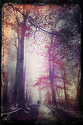 Misty and moody forest track on winter day - photograph edited with texture overlays