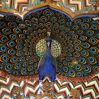 Asia, India, Jaipur. Architectural detail of Peacock at Jaipur Palace.