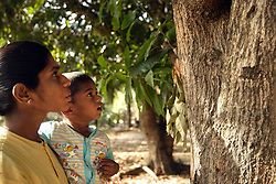 Wassanthy Partheepan shows her son Vithusan the mango tree that sits on their new land, Batticaloa, Sri Lanka, July 9, 2005. The family, who lost a 4 year old girl named Madusia, first took refuge in the Anapandi Hindu temple after their house was flattened in the tsunami. They were then moved to the Hindu college and placed in tents donated by aid organizations. Six months later, they were still living on the land where their tents were set up, but they also had a partition of their own in a tin hut with a thatched roof. With earned and borrowed money, plus a little given to them for the loss of Madusia, the family bought a small piece of land, where they plan to start anew.