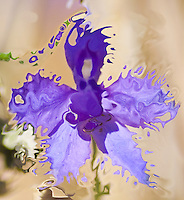 vanishing indigo surreal flower petals into many pieces. It seems that the flower is vanishnig in the wind