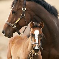 Woodlands Farm - Foals