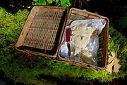 oyster mushroom foraging