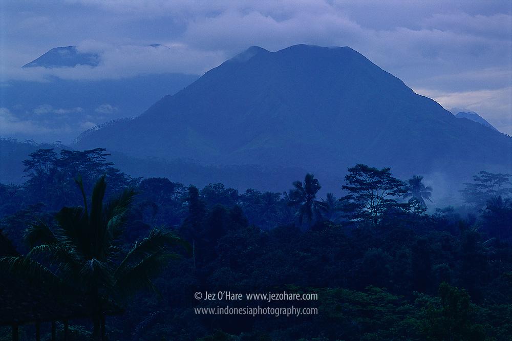 Mount Merbabu seen from Losari Coffee Plantation, Grabag, Magelang, Central Java, Indonesia.