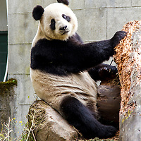 2012 On the Trail of Pandas, Sichuan, China