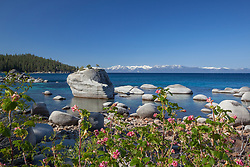 """""""Wildflowers at Bonsai Rock 1"""" - These wildflowers were photographed along the East shore of Lake Tahoe at Bonsai Rock."""