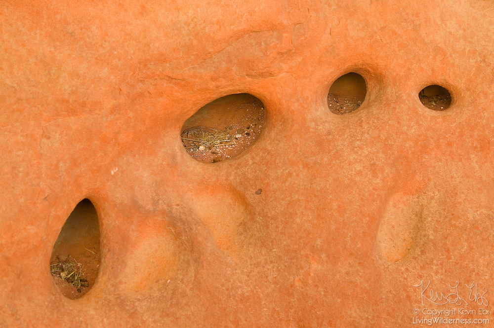 Grasses, tiny rocks and other debris is trapped in several small holes eroded in a sandstone wall in the Valley of Fire, Nevada.