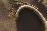 Tail of a brown Sloughi dog (Arabian greyhound) in desert sand.