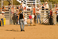 Mutton Busting, riding sheep, .Kids rodeo at Livingston, Montana
