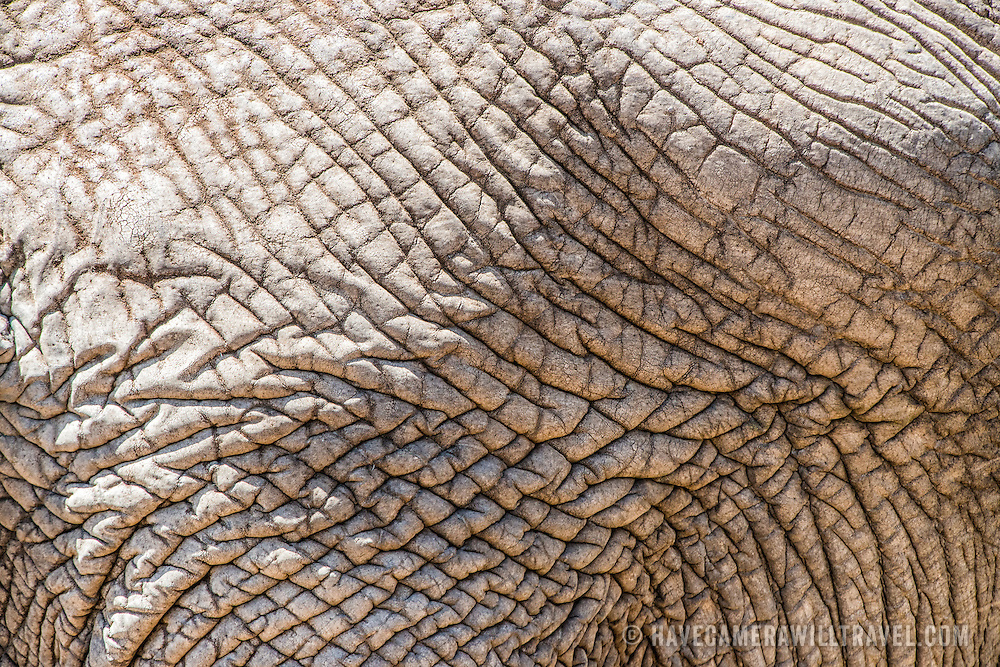 The wrinkled skin of an adult elephant at Tarangire National Park in northern Tanzania not far from Ngorongoro Crater and the Serengeti.